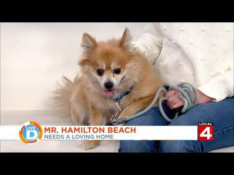 mike-morse-law-firm---live-in-the-d:-local-4-pet-of-the-week