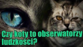 Czy obcy obserwują nas przy pomocy kotów ?