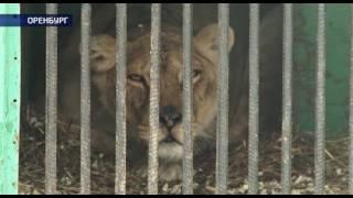 Социальные сети обеспокоены состоянием передвижного зоопарка в Оренбурге