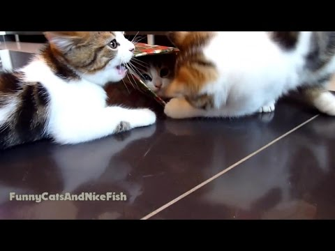 One Box for Three  cute Kittens | Funny Cats video