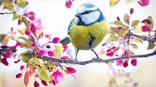 เสียงฝากจากนก -นก พรพนา