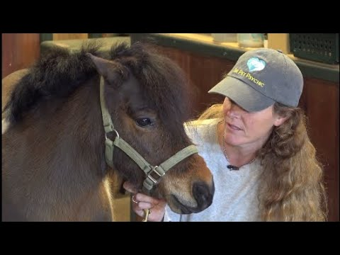 The Pet Psychic Talks With A Rescue Pony Animal Zone Season 3 Episode 12