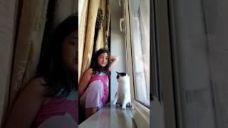 Vlog:видос с котом. Он кусается и царапается