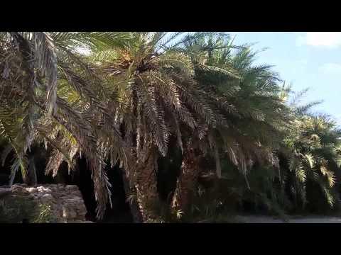 Vai Palm Beach Sitia East Crete