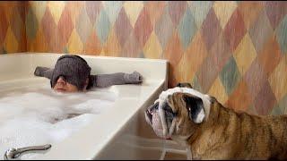 reuben-the-bulldog-10-reasons-to-not-have-a-bulldog