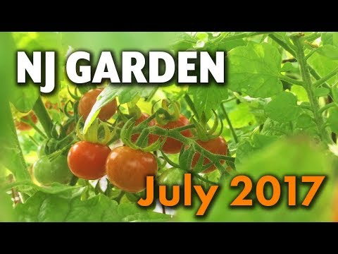 backyard-organic-raised-bed-garden-tour-in-nj---july-2017