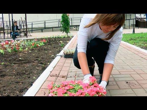 На фото Украшают цветами сквер за МФЦ изображение