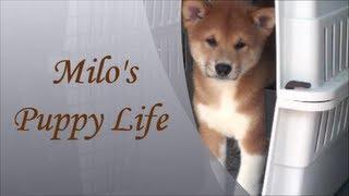 Milo's Puppy Life