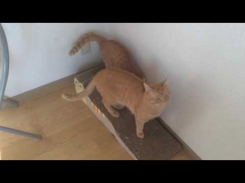 倒した猫『保護猫るる らら物語』