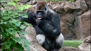 Лоро Парк. Тенерифе.12 серия. Диалоги о животных.