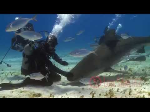 Tiger Beach, Bahamas. Underwater Planet Series HD