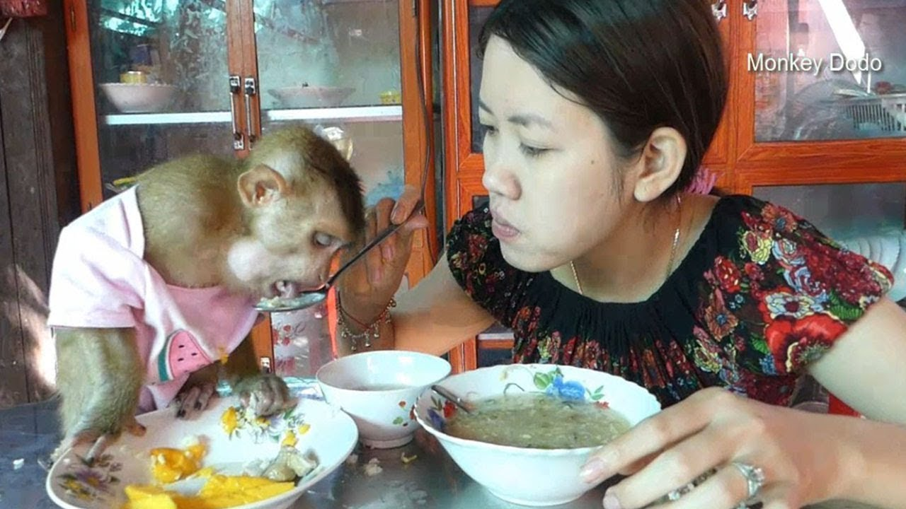 Wow!! Baby Monkey Dodo Like Eat Chicken Conger (Rice Soup) So Much
