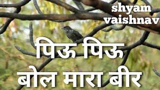 Piyu piyu bol mara bir (देशी अंदाज में) shyam das vaishnav bhajan