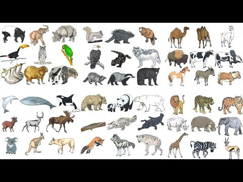 - Coloring Lot Of Animals - Animal Coloring Book - YouTube