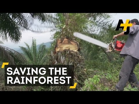 Saving The Rainforest From Illegal Palm Oil Plantations