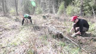 Spring planting at Pack Forest
