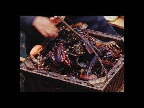[P.E.I. Lobster Fishing] (1943 ?)