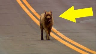 Dieser Hund läuft seit 12 Jahren täglich 7km um seine Freunde zu sehen!