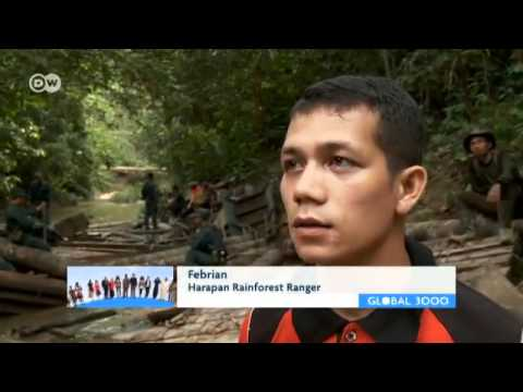 Indonesia Fights for its Rain Forest   Global 3000