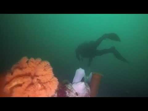 2018 Diving PNW Pacific Northwest Series
