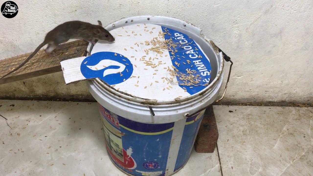 Meilleur Piege A Rats 2019 13 Souris Piegees Pendant 1 Heure Trap Piege A Souris Rat 3 10 Youtube