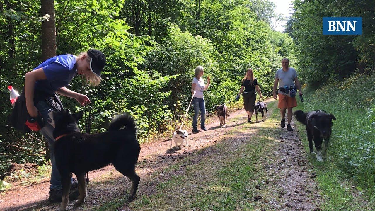 Tierheim Baden Baden Hunde