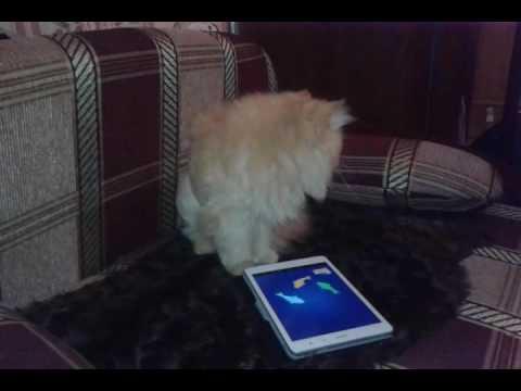 Симулятор Кошки Онлайн4.0 скачать- Симулятор …