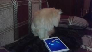 Игра рыбки для кошки