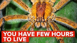 The Most Venomous Spider Bites In The World
