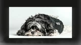 Fotosessie van een klein hondje