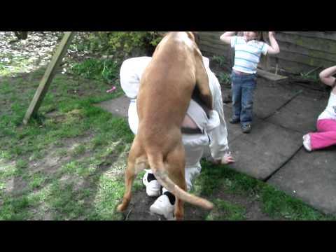 Doggy loving x
