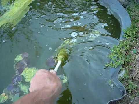En finir avec les algues vertes dans un bassin - YouTube