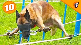 Top 10 Easy To Train Dog Breeds In The World