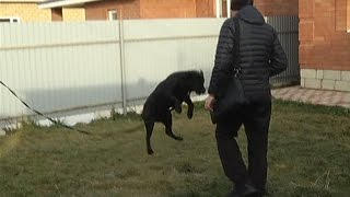 Как отучить собаку прыгать на людей(один из способов)