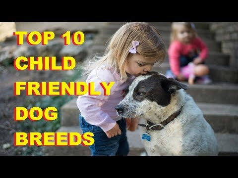Top 10 Child Friendly Dog Breeds - Top 10 Friendly Dog Breeds In The World - Aspin