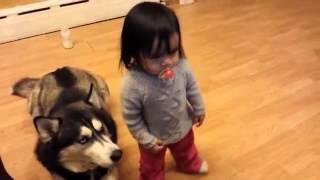 Приколы с собаками и детьми   Малышка любит свою собаку