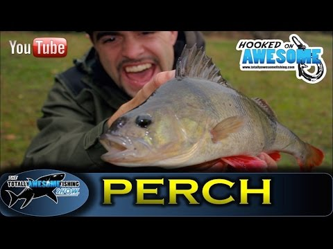 Drop Shot Fishing for PERCH -TAFishing Show