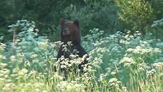 видео Веркола - Пинежье