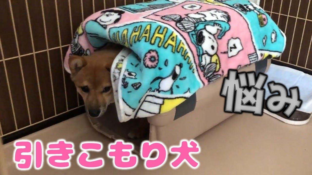 柴犬(豆柴)みかんは夜行性?引きこもり犬の昼と夜