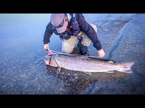 Angler Fängt SEHR Seltene RIESEN Lachs-Art!