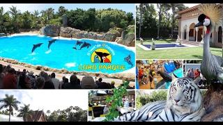 Cita Reisen Gran Canaria – Loro Parque auf Teneriffa!