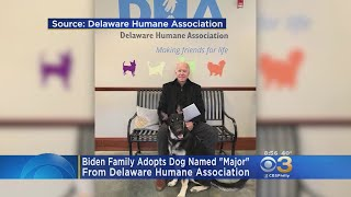 Biden Family Adopts Dog From Delaware Humane Association