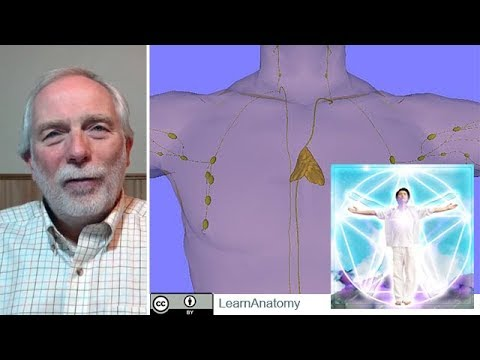 Vagela Speaks on the Importance of the Thymus as a Focus of the Fifth Crystal Ray