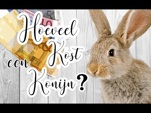 Hoeveel Kost een konijn?| BunnyBasic's #1| BUNNBUNN