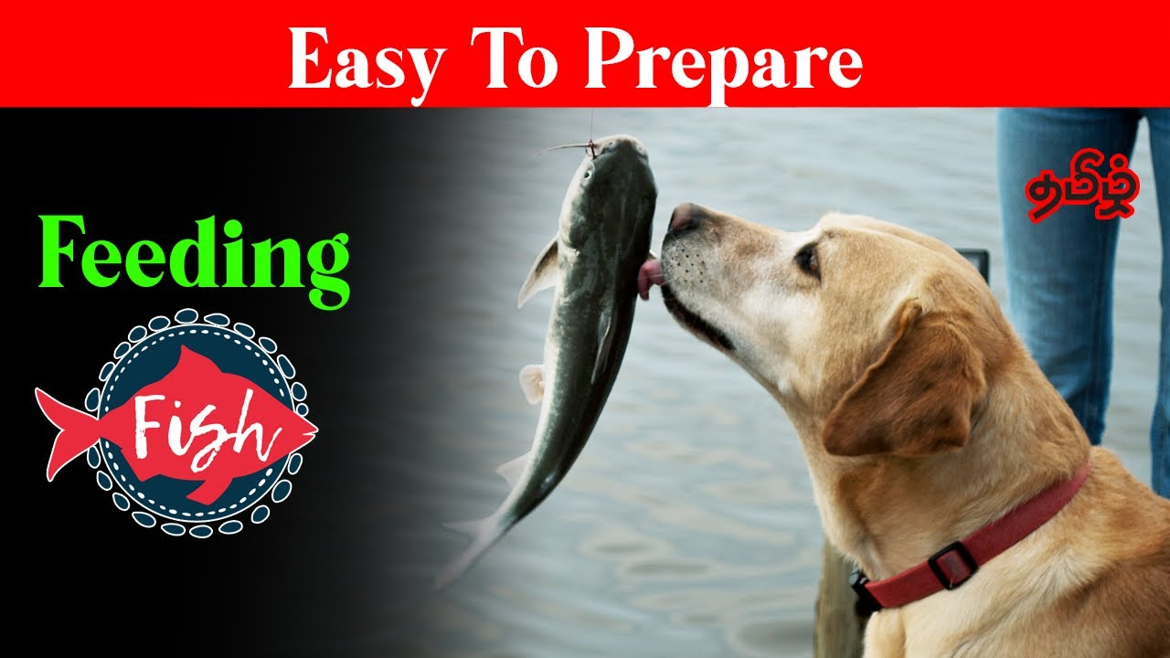 How to  prepare fish for Dogs In Tamil