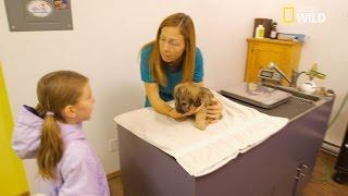 Vaccination d'un chiot