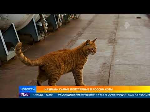 Названы самые популярные в России коты