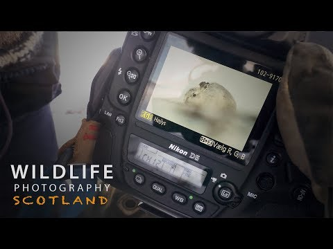 PHOTOGRAPHING MOUNTAIN HARES part 1 | Wildlife photography in Scotland - behind the scenes VLOG