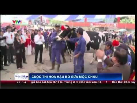 Cuộc thi hoa hậu bò sữa Mộc Châu, Việt Nam có gì mới?