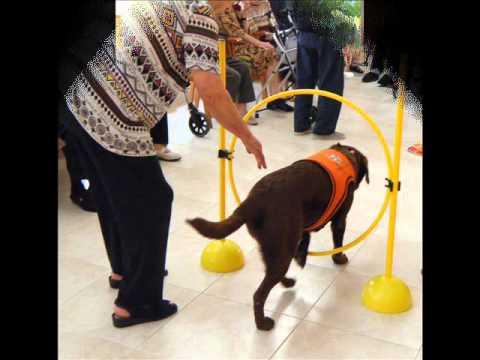 Sesiones de Terapia Asistida Canina.Residencia Sant Jordi de Celra